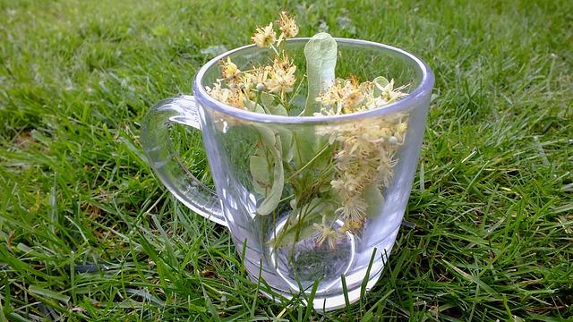 bylinky na čaj