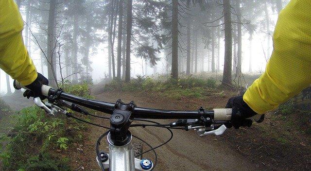 lesní cyklostezka